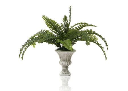 chaparral: A fern plant in a stone vase over a white background
