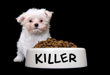 A cute small dog with a large bowl of food Stock Photo - 3406419
