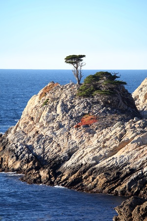 Cyprus Tree in Monterey (This is NOT the protected Lone Cyprus Tree on 17 Mile Drive) Фото со стока - 8318256