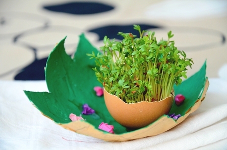 crecimiento planta: Easter decoration with egg shell and green watercress sprouts growing in it