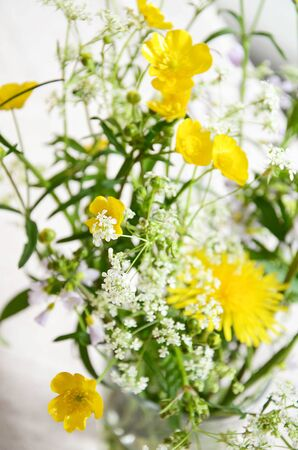 freshly picked: Meadow flowers yellow and white freshly picked up