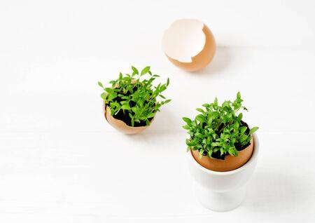 Seedlings in eggshells photo