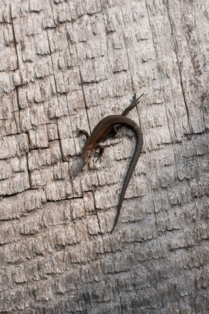 small lizard on a grey background