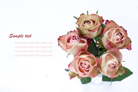 Bouquet of white-pink roses with text space Stock Photo - 11919473