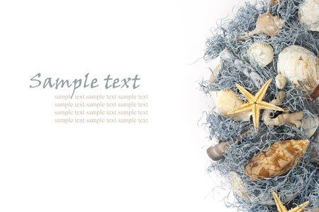 Variety of seashells with seaweeds on white background