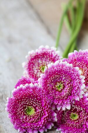 Pink gerberas Stock Photo - 14732378
