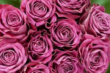 Bunch of pink roses Stock Photo - 15148872