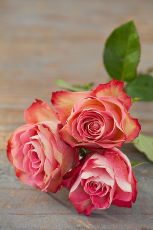 Pink roses on wooden background Stock Photo - 17445018