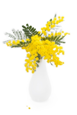 Mimosa in vase on white background