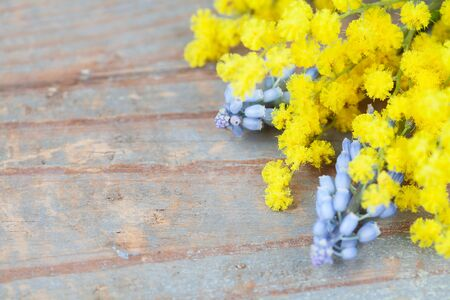 Mimosa and muscari on wooden background