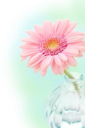Single pink gerbera in vase on colorful background
