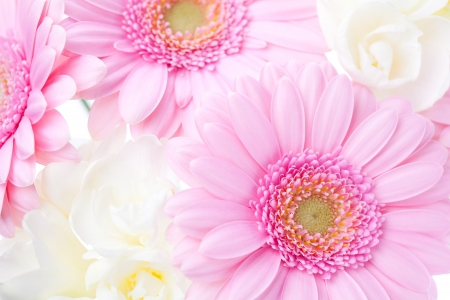 Flower background with pink gerberas and white freesias Stock Photo