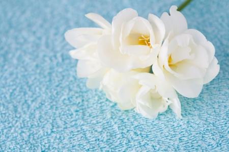Spa background: blue towel and white freesia