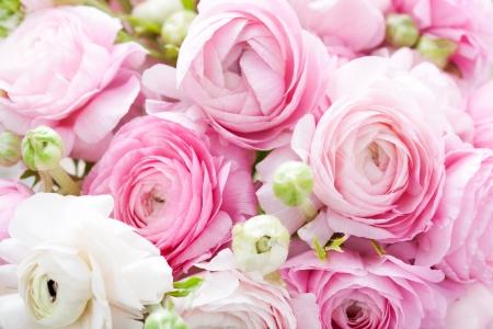 arreglo de flores: Fondo de color rosa y blanco ranunculus Foto de archivo