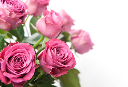 Bouquet of beautiful pink roses on white background