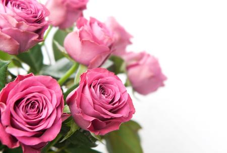 flores fucsia: Ramo de hermosas rosas de color rosa sobre fondo blanco