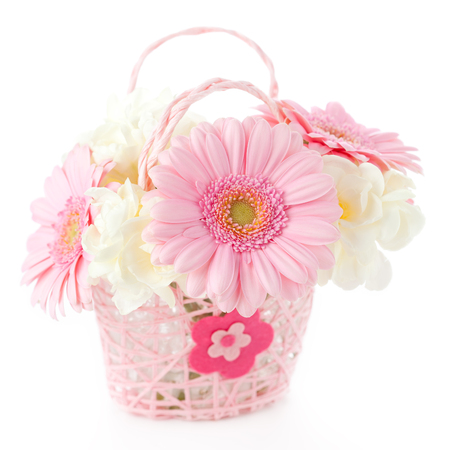 Pink gerberas in pink basket on white background photo