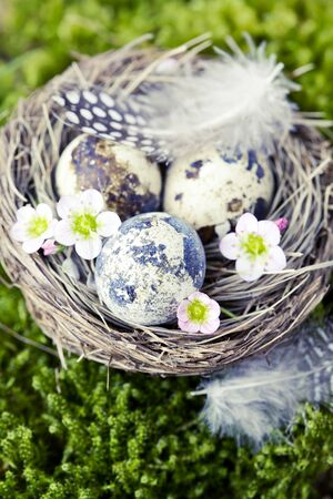 Easter concept: nest with quail eggs and flowers