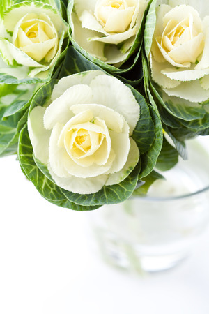 White decorative cabbage flowers in vase