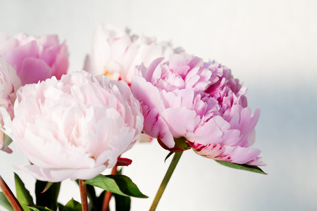 Bouquet of beautiful pink peonies Stock Photo