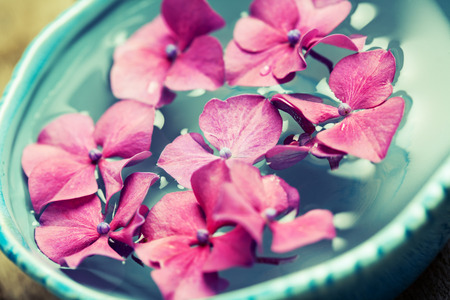 spa therapy: Bowl of water with pink hydrangeas. Spa concept