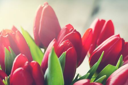 tulipan: Valentine day concept:  bunch of red tulips