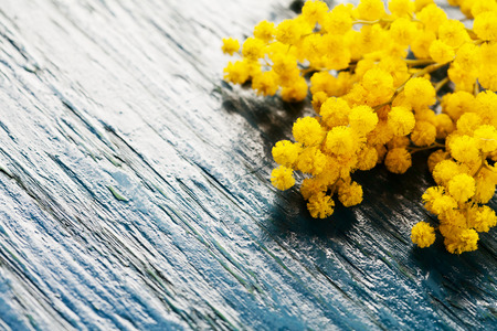 brunches: Brunches of mimosa (silver wattle) on wooden background