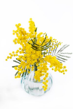 Bouquet of mimosa (silver wattle) in vase on white background