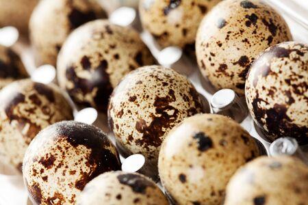 huevos codorniz: Huevos de codorniz en filas