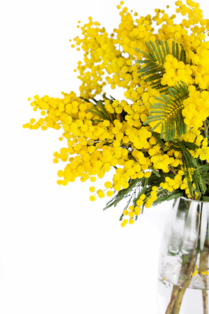 brunches: Mimosa brunches in vase on white background