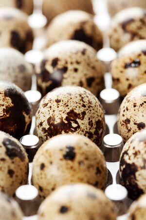 huevos de codorniz: Huevos de codorniz en filas