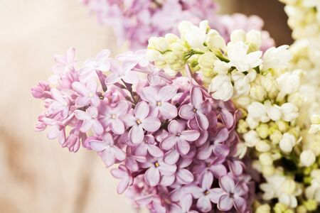 brunches: Brunches of white and purple lilac