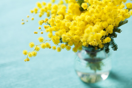 cyan: Brunches of beautiful Mimosa flower on cyan blue background