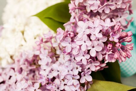 Bouquet of beautiful lilac brunches Stock Photo