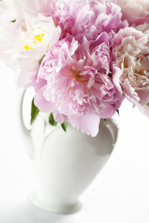 Beautiful Pink Peonies In White Vase Stock Photo Picture And