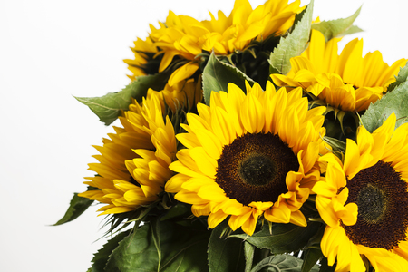 helianthus: Bright sunflowers bouquet on white background, close up Stock Photo