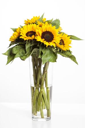 Girasoles brillantes en florero de vidrio sobre fondo blanco