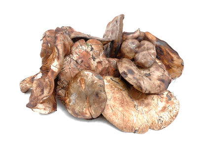 Paxillus mushroom heap isolated on the white background.