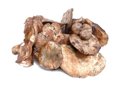 Paxillus mushroom heap isolated on the white background.