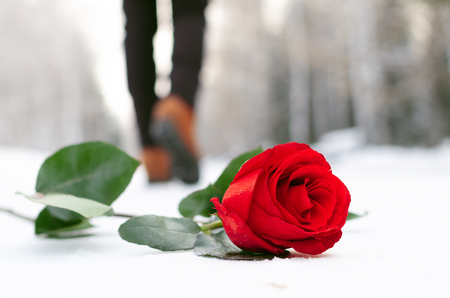 Red rose flower laying on the snow covered road in a winter park and walking away woman silhouette. Failed date or broken heart concept. Stock Photo