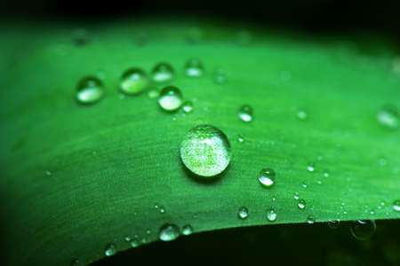 Dew drops on a green leaf abstract background. Stock fotó