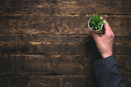 Businessman is holding in hand a green plant in a pot above his office table background with a copy space. Banco de Imagens