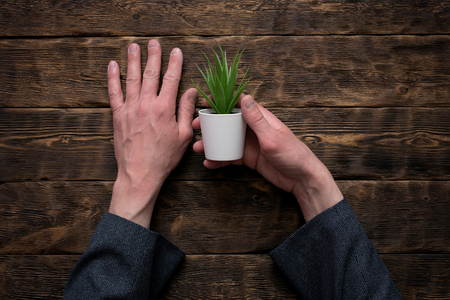 Businessman is holding in hand a green plant in a pot above his office table background.