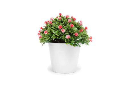 Green artificial plant in the jar with red flowers isolated on white background.