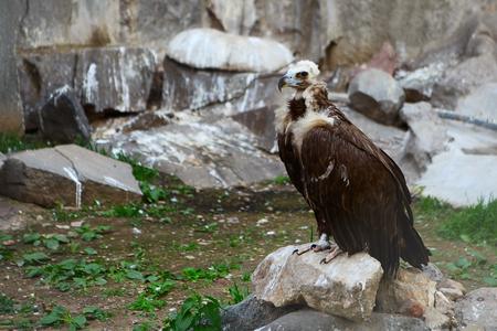predatory: predatory bird with a sharp beak on blurred background