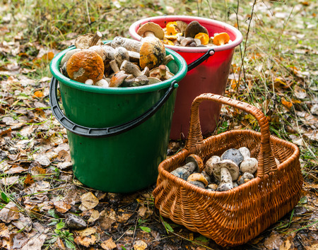 Shopping and a bucket full of edible mushrooms Stock Photo
