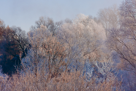 Winter background with frozen tree branches. Sunny day in Russia.