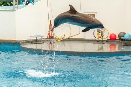 dolphin jumping through a hoop