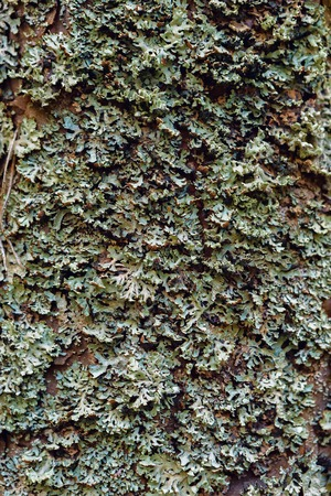 Bark and moss Stok Fotoğraf