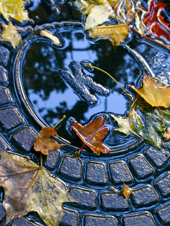 the hatch: Drainage hatch with colorful autumn leaves after rain